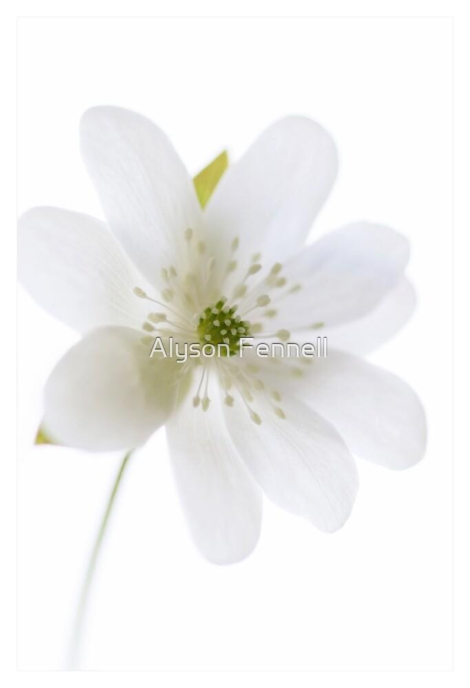 Little White Flower by Alyson Fennell
