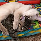 snuggle by prdirect