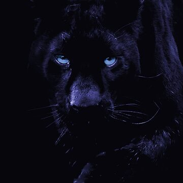 PANTHER by Paparaw