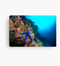 Wide Angle Starfish Canvas Print