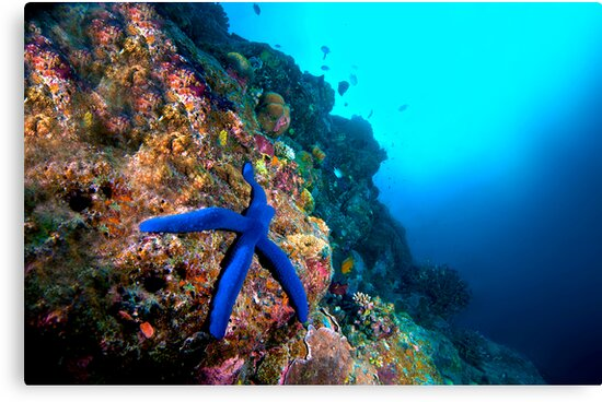 Wide Angle Starfish by Melissa Fiene