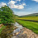 Littondale Tree  by RamblingTog