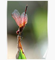 THE BALLERINA - Red Basket dragon fly Poster
