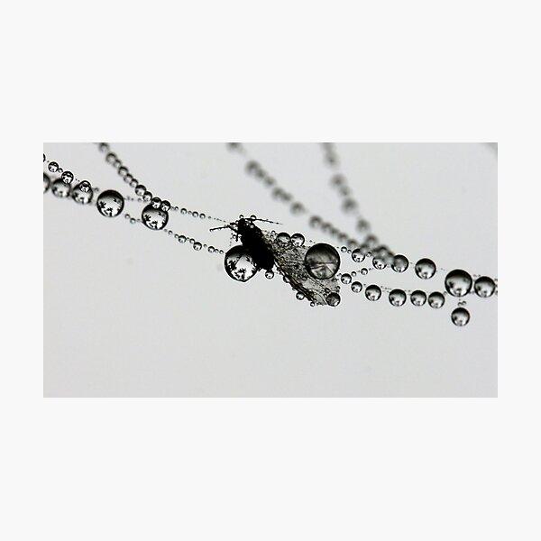 In suspension Photographic Print