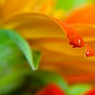 The Red Petal by Mukesh Srivastava