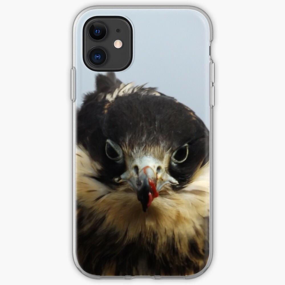 Juvenile Peregrine iPhone Case & Cover