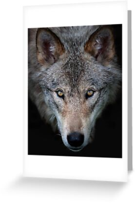 """""""All the better to see with, my child"""" Timber Wolf by Jim Cumming"""