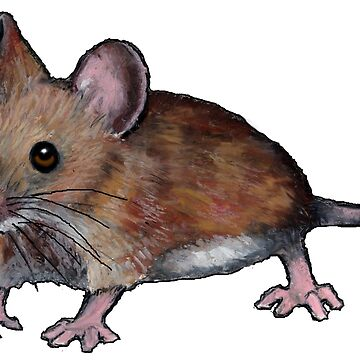 Furry Mouse in Oil Pastel, Rodent by Joyce