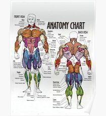 Anatomie-Diagramm - Muskel-Diagramm Poster