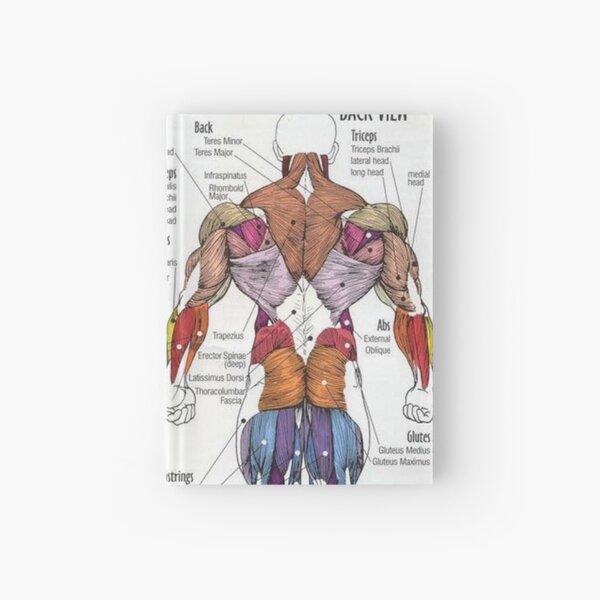 Anatomy Chart - Muscle Diagram Hardcover Journal