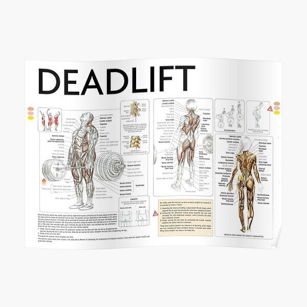Deadlift - Exercise Diagram Poster