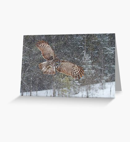 Through the Snow - Great Grey Owl Greeting Card