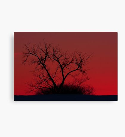 Red sky at night - Bare Tree Canvas Print