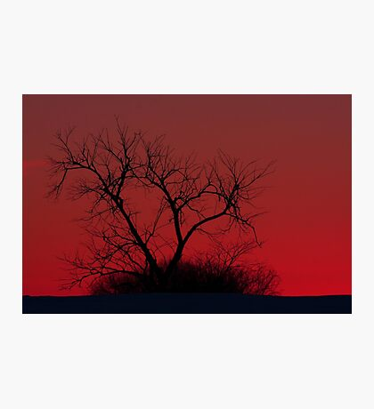 Red sky at night - Bare Tree Photographic Print