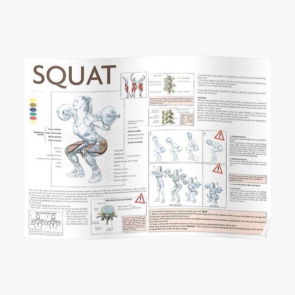 Squat - Diagramme d'exercices Poster