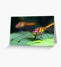 helicopters Greeting Card