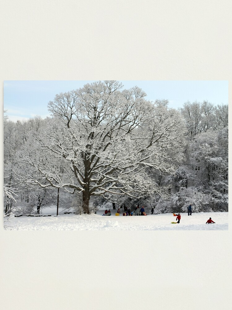 Alternate view of Connecticut - Sledding Waveny Hill Photographic Print