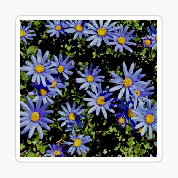 Sunbathing Blue Daisies Sticker