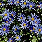 Sunbathing Blue Daisies by Lynda Anne Williams