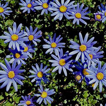 Sunbathing Blue Daisies by LyndaAnneArt