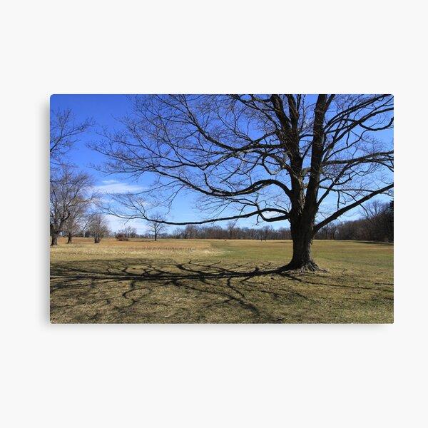 Connecticut - Waveny Tree Canvas Print