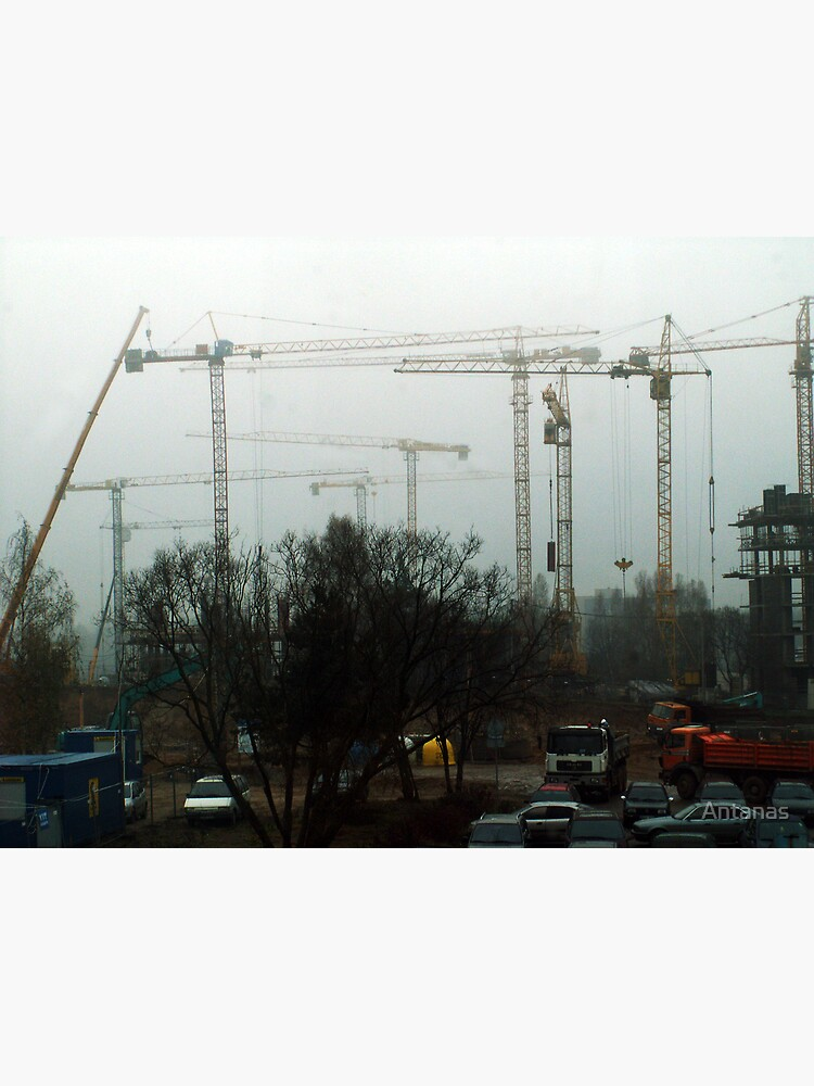 Cranes in foggy by Antanas