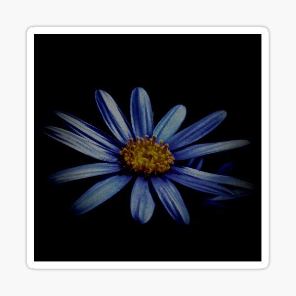 Blue Daisy On Black Sticker
