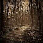 A walk in the woods by jammingene
