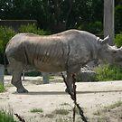 Rhino 004 by pasta26mc