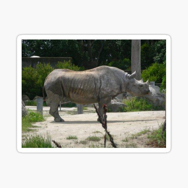 Rhino 004 Sticker