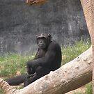 Chimpanzee 004 by pasta26mc