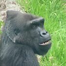 Gorillas 015 by pasta26mc