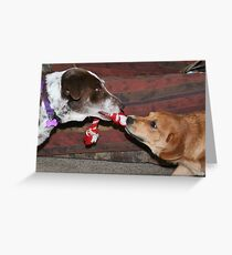 Dogs at play 2 Greeting Card