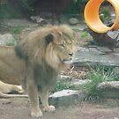 Lions 010 by pasta26mc