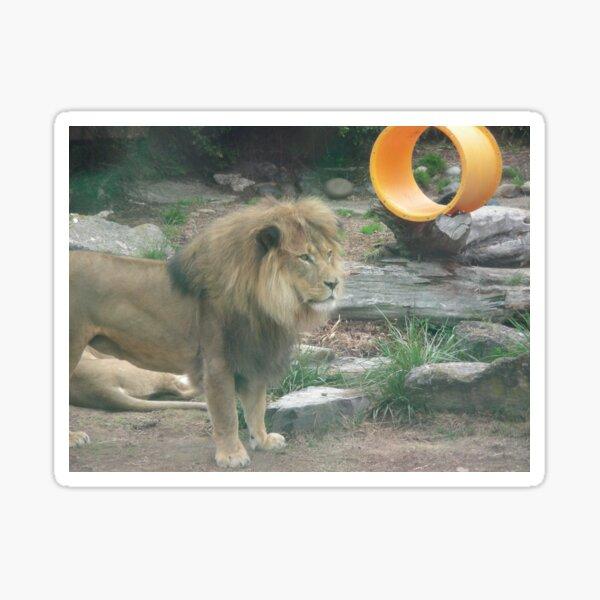 Lions 010 Sticker