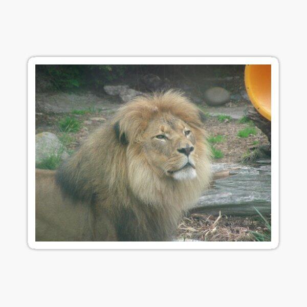 Lions 011 Sticker