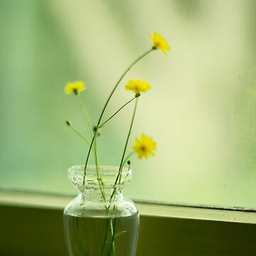 Buttercups in vase by pennyschiereck