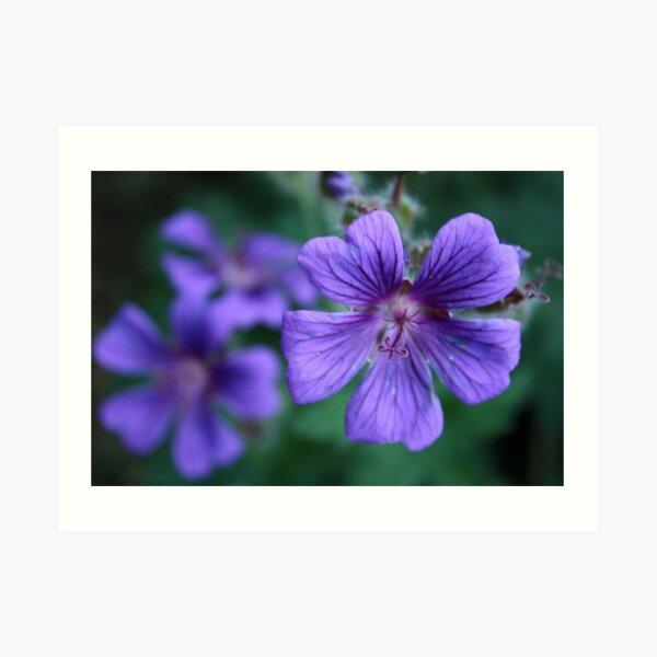 Violet Star Art Print