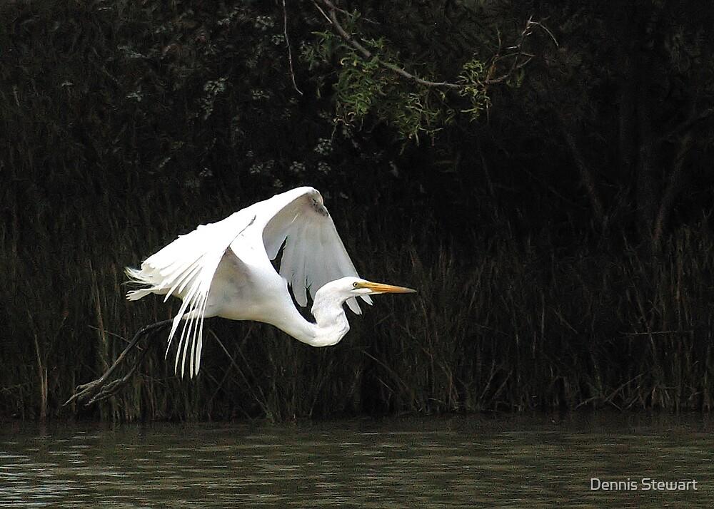 Great Egret in Flight by Dennis Stewart