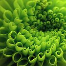 patterns of a green mum by lensbaby