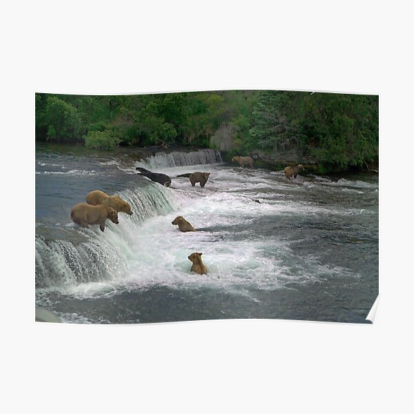 Brown Bears, Brooks Falls, Brooks River, Katmai National Park, Alaska Poster