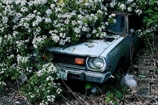 Datsun by Peter Kearns