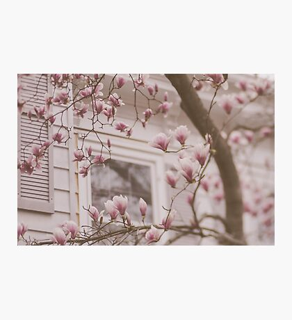 I Dream In Spring Photographic Print