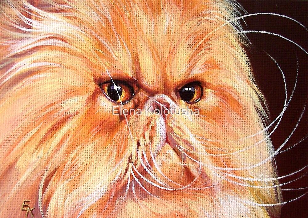 Wonder whiskers by Elena Kolotusha