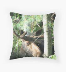Young Bull Moose Throw Pillow