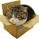 Box Cat by Elisecv