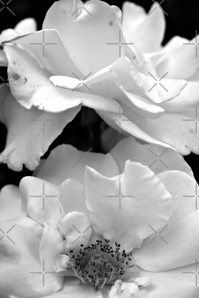 Black and White Botanical Series C by JHP Unique and Beautiful Images