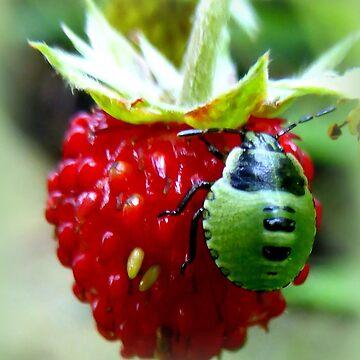 Green Bug on Wild Strawberry by angel1