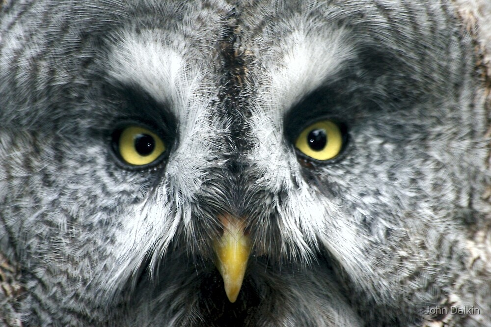 Owl Eyes by John Dalkin