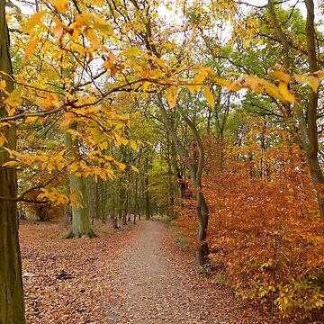 An autumn woodland walk at Golden Acre Park by AnnaMyerscough